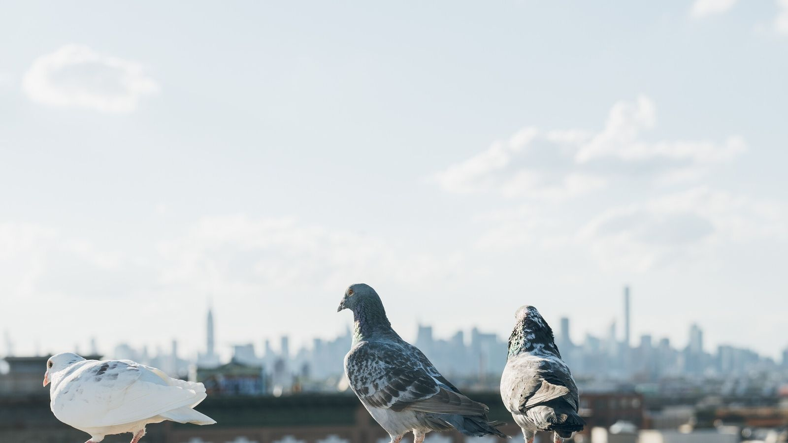 Avitrol, pesticida utilizado no controle de aves e registrado na Agência de Proteção Ambiental dos Estados ...