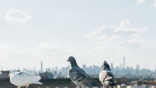 Mortes recentes de aves por pesticida permitido por lei levantam polêmica