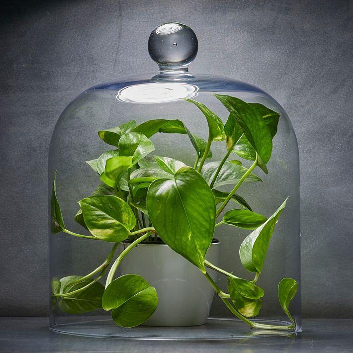 A jardinagem em ambientes internos esteve em ascensão este ano, e muitas das plantas domésticas populares ...