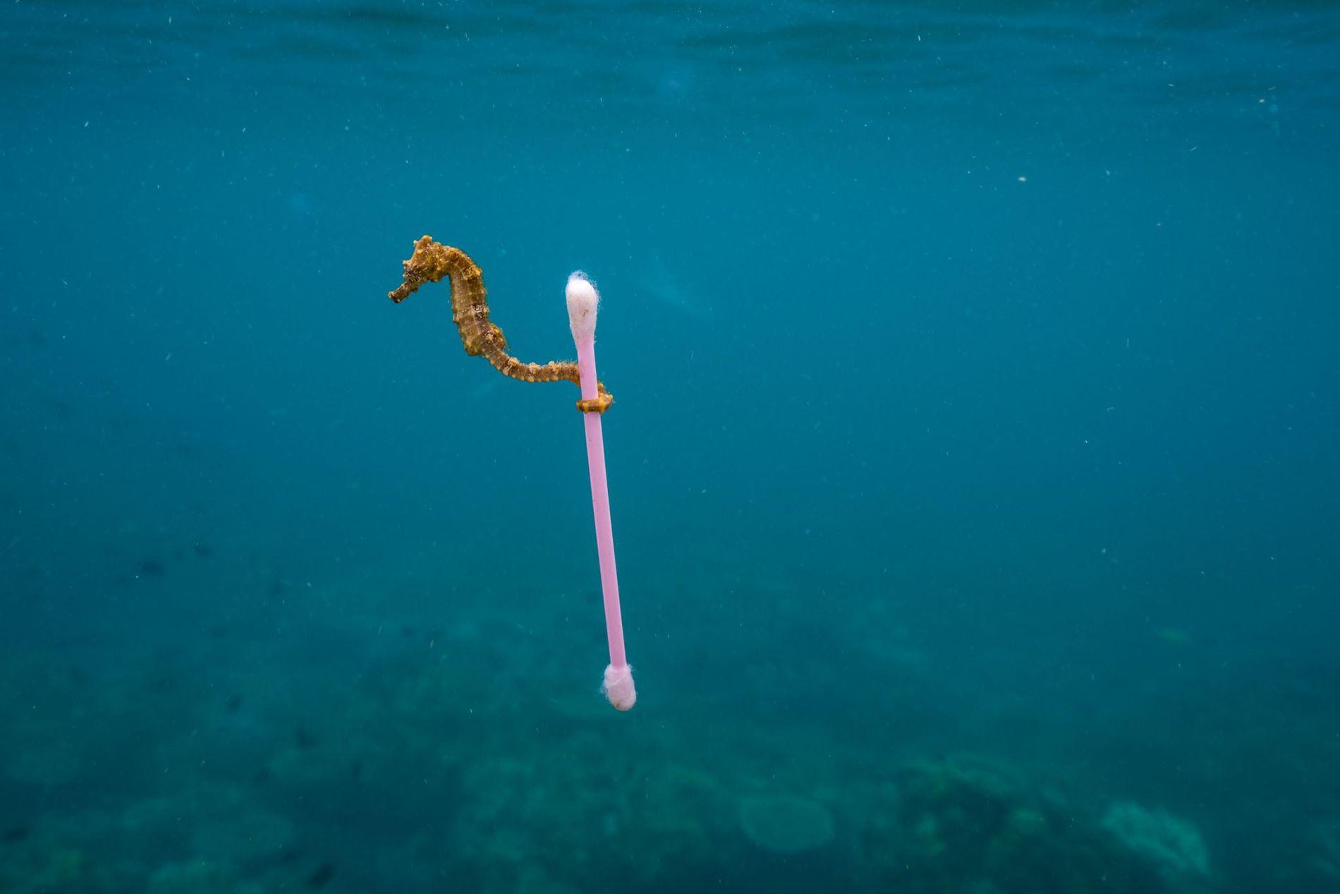 Planeta ou Plástico? Assuma o compromisso