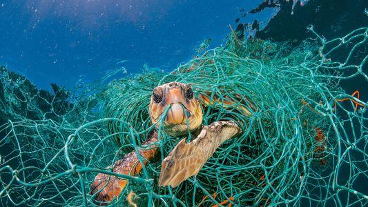Para os bichos, o plástico transforma o oceano em um campo minado