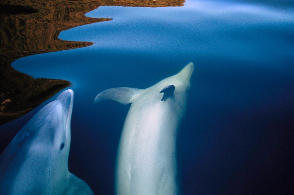 Golfinhos no fiorde