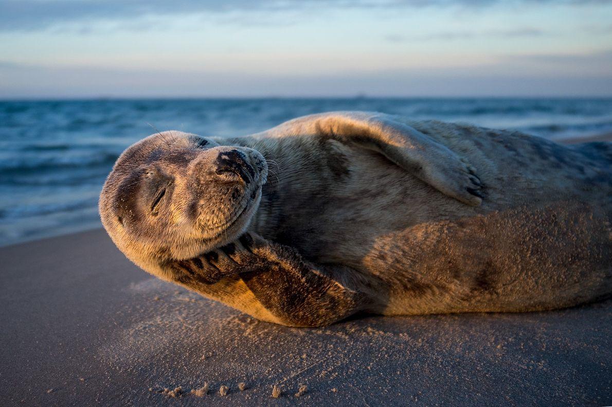 foto de uma foca tomando sol na praia