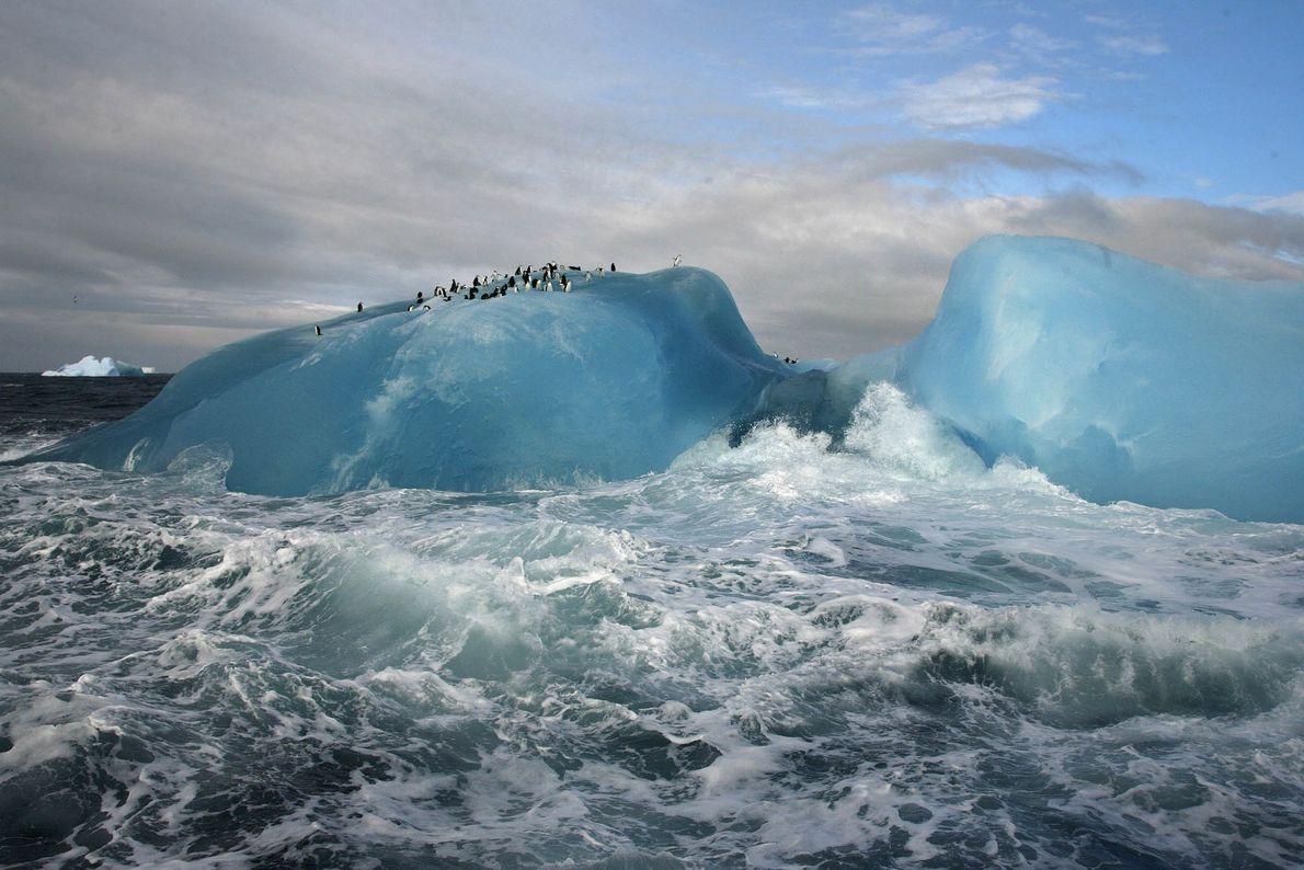 Paraíso dos pinguins