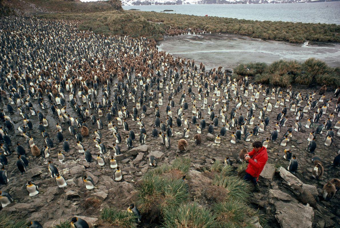 Reino dos pinguins