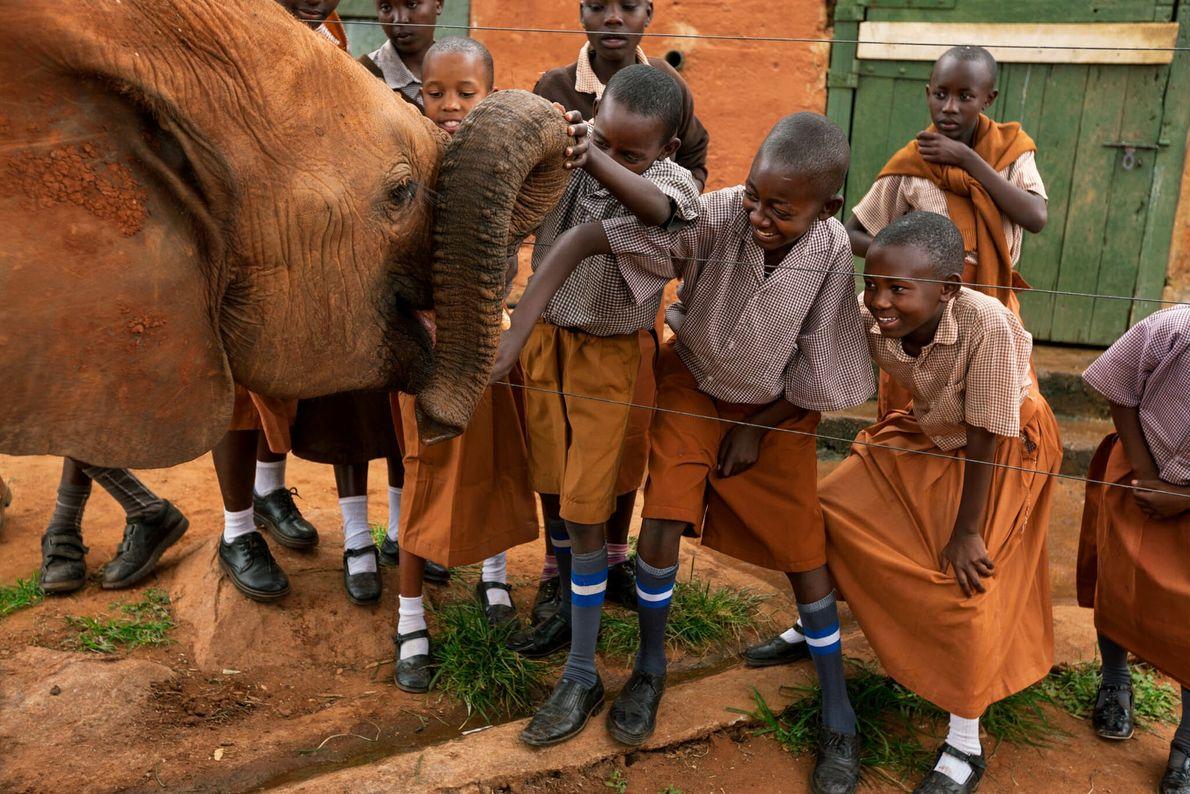 Elefante resgatado