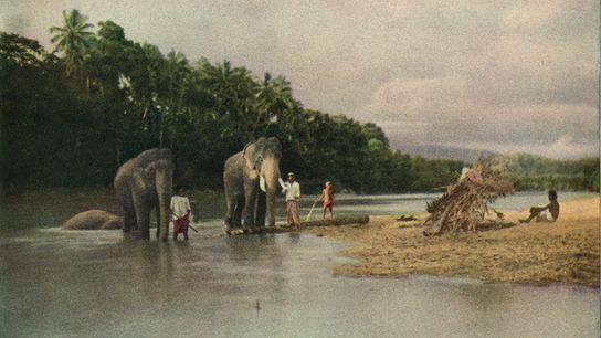 Domadores de elefantes