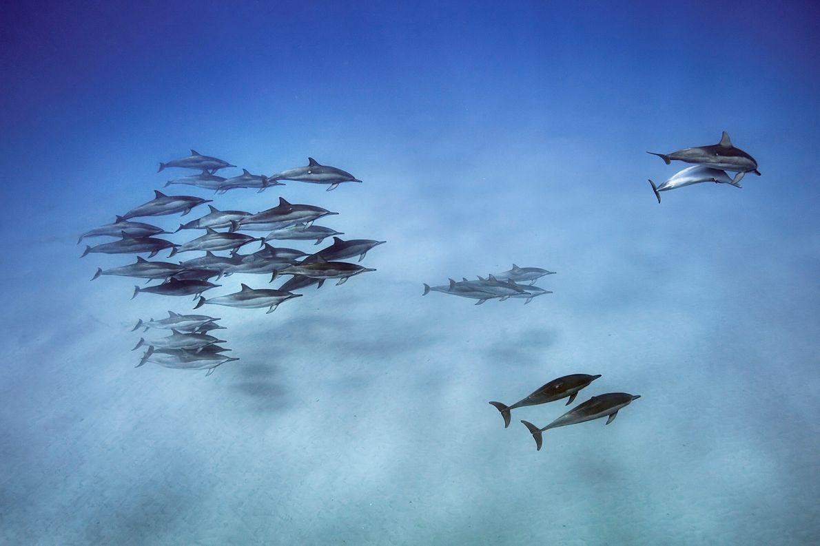 Amigos golfinhos