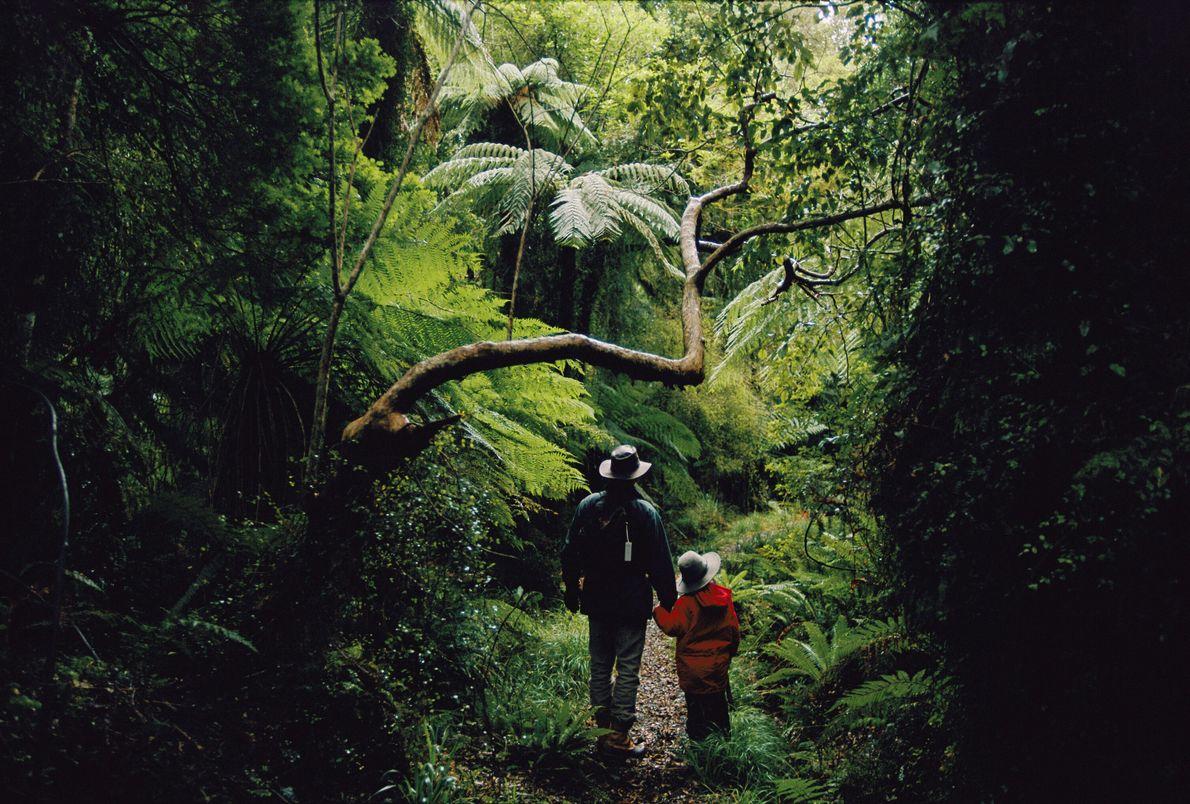 No Parque Nacional Fiordland, na Nova Zelândia, caminhantes param para observar um cipó. Maior parque do ...