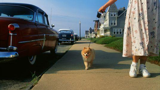 mulher passeia com cachorro na calçada