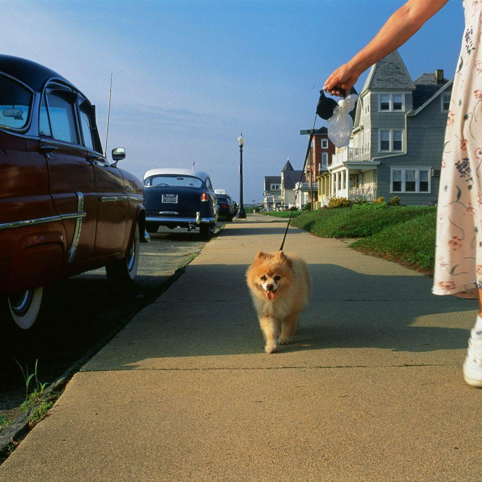 Cão – e carros – de madame