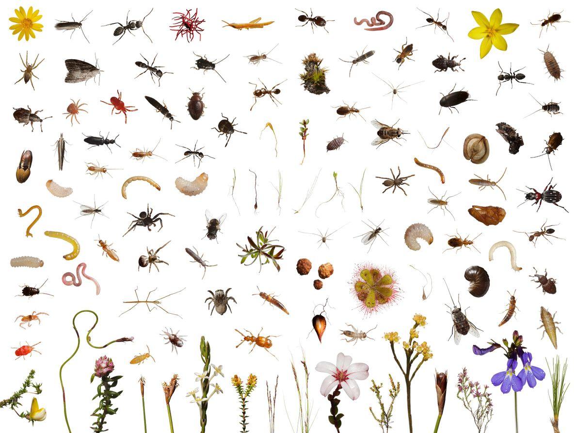 foto de vários pequenos animais