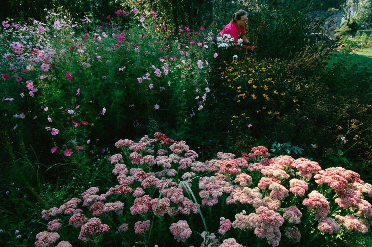 jardim de flores rosas e borboletas