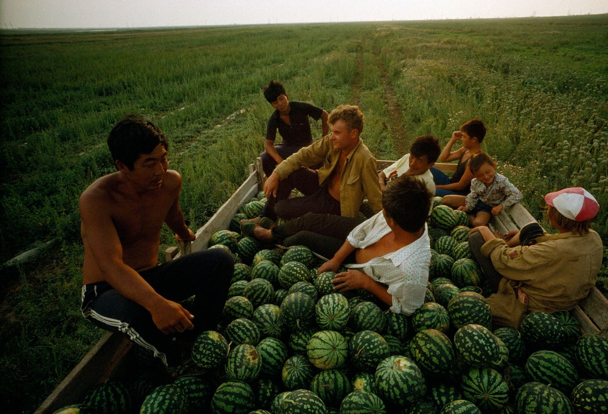 lavradores colhem melancias