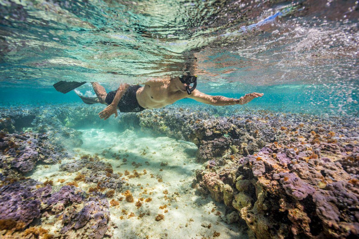 Foto de Obama mergulhando com snorkel em coral