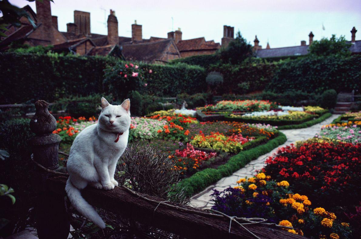gato em um jardim com flores bem cuidado
