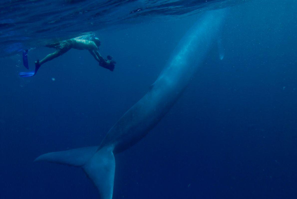 foto subaquática de mergulhador ao lado de baleia jubarte