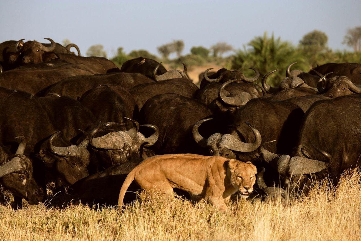Poder da manada