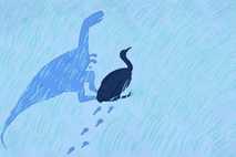 Todas as aves são parentes próximos de um grupo de dinossauros com penas dos quais evoluíram ...