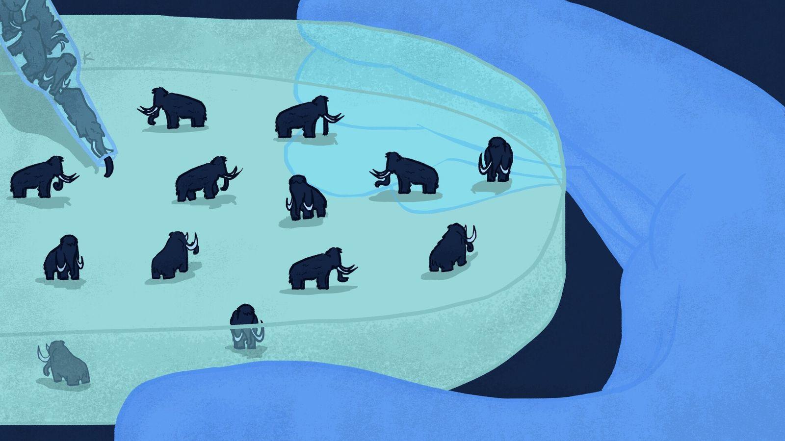Mais de 5 mil anos depois de serem extintos, os mamutes são uma obsessão de alguns ...