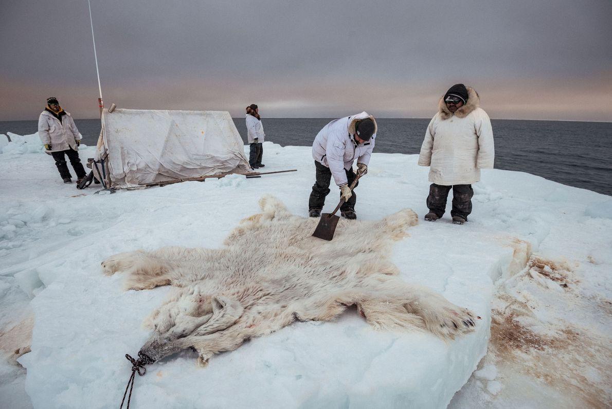 Membros do clã Yugu limpam a pele de um nanuq, ou urso-polar, abatido quando se aproximou ...