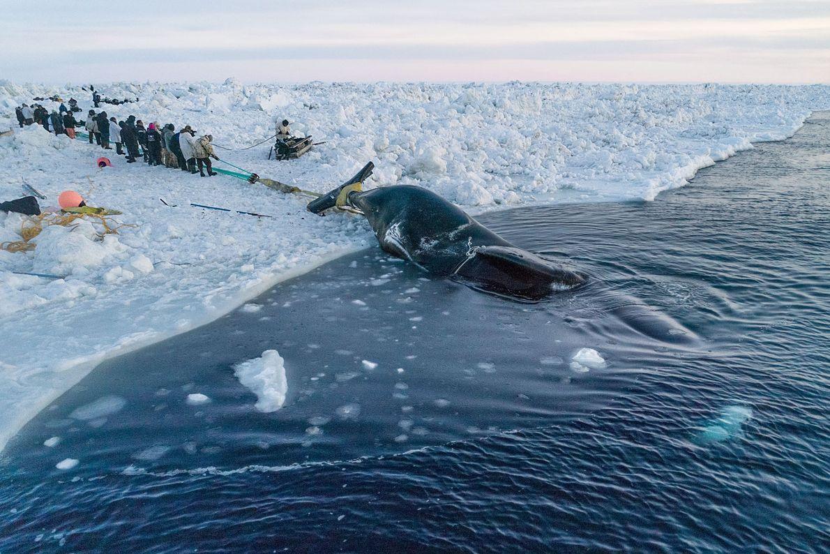 """""""Pescar baleias é comunitário. É preciso uma vila para puxar uma baleia"""", diz o capitão baleeiro ..."""