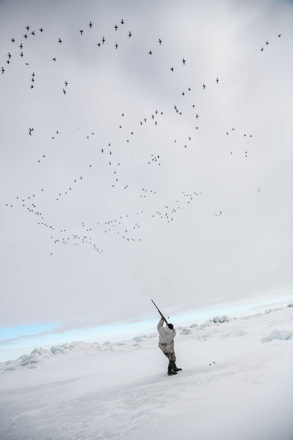 Durante a temporada de caça, os Inupiat não caçam outras coisas, mas um enorme bando de ...