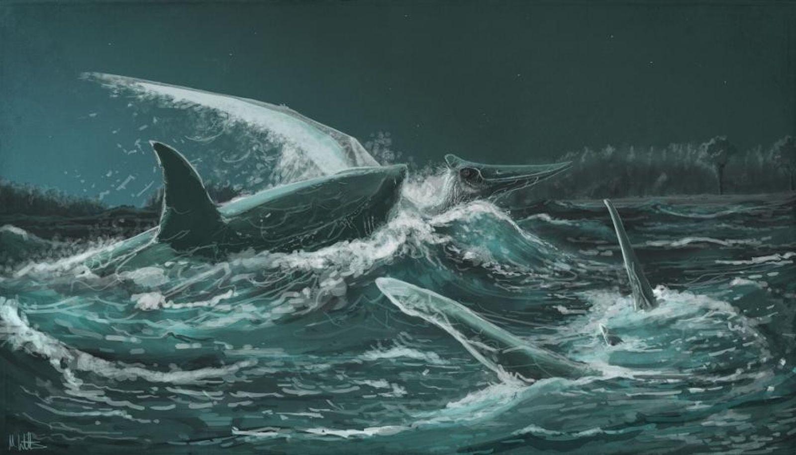 Nesta ilustração, um Pteranodonte se torna presa do antigo tubarão Squalicorax kaupi.