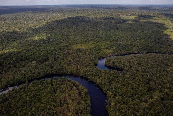 Floresta Amazônica no oeste do Pará, onde os povos borari e arapium reivindicam um território, a ...