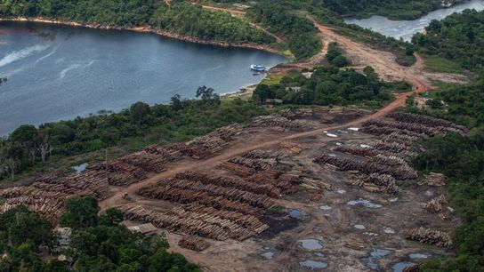 Pátio de com milhares de toras de madeira às margens do rio Arapiuns, no oeste do ...