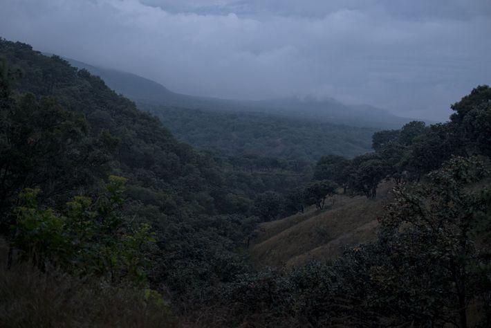 Tarântulas foram encontradas no Parque Nacional Floresta Primavera, próximo ao criadouro de Rodrigo Orozco. A destruição ...