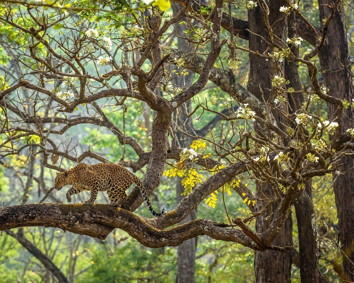 Nagarahole Tiger Reserve, India