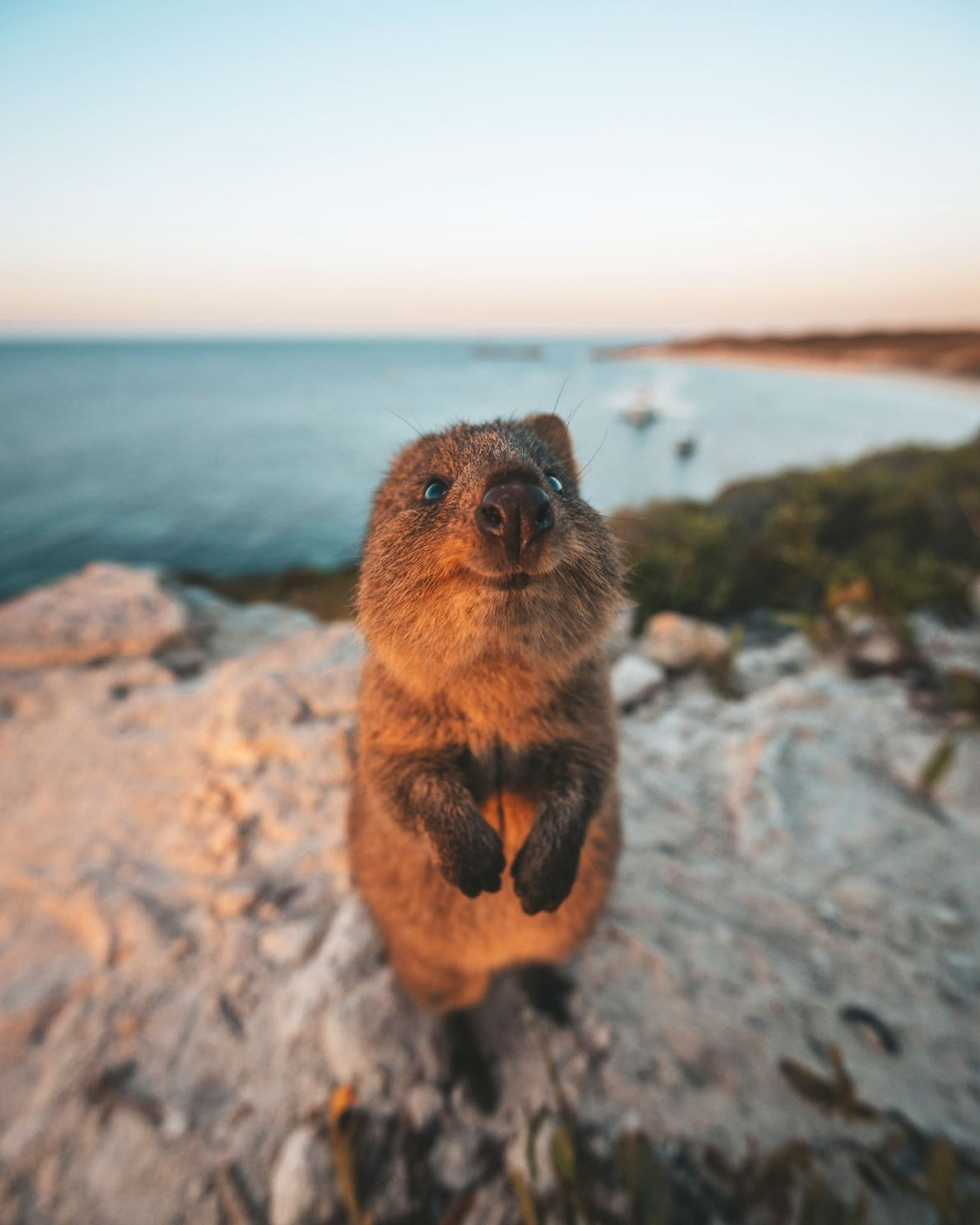 Rottnest Island, Australia