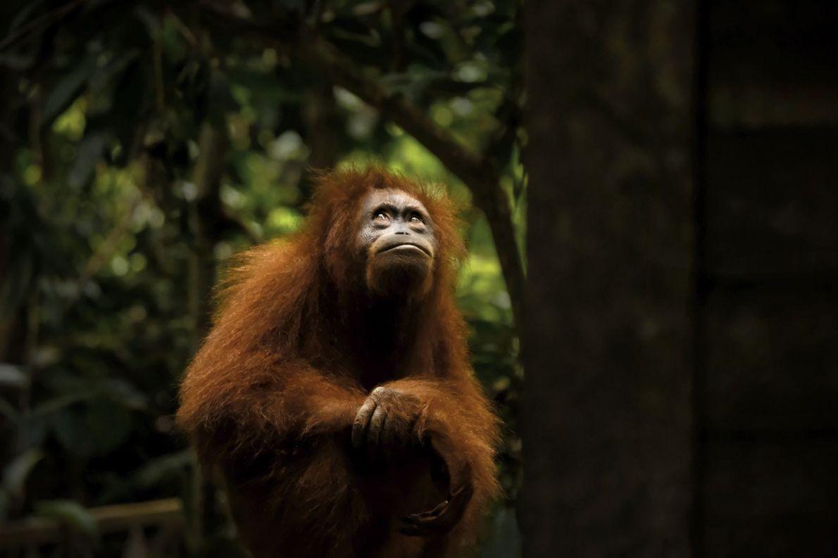 Sepilok Forest Reserve, Borneo