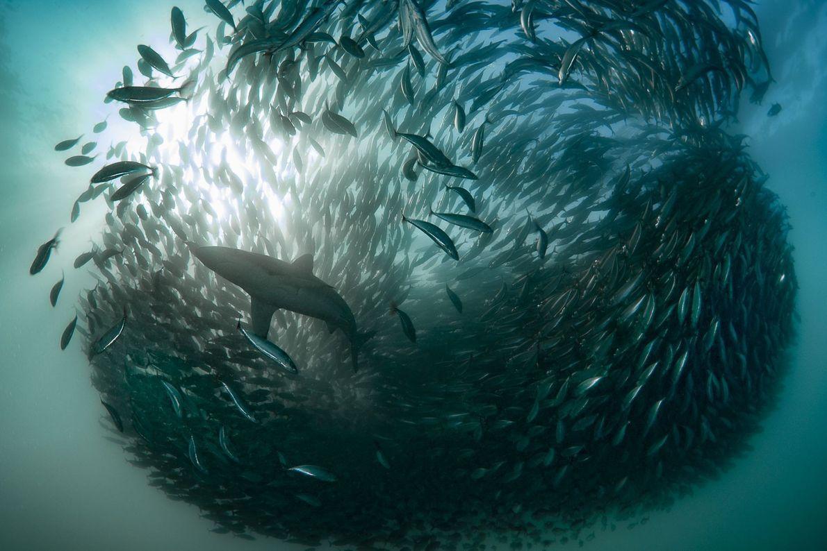 Port St. Johns, South Africa