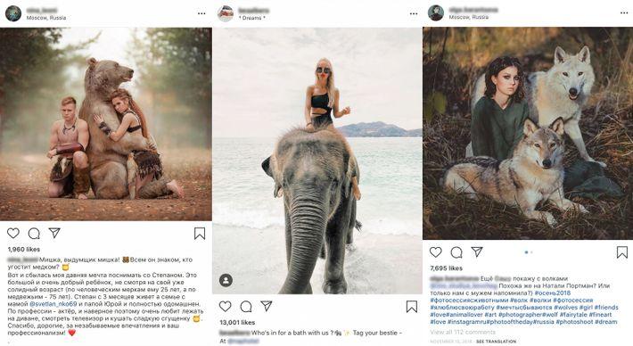 Fotos de turistas com animais cativos inundam plataformas de redes sociais como o Instagram. Com um ...