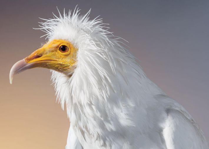 portfolio-aves-ameacadas