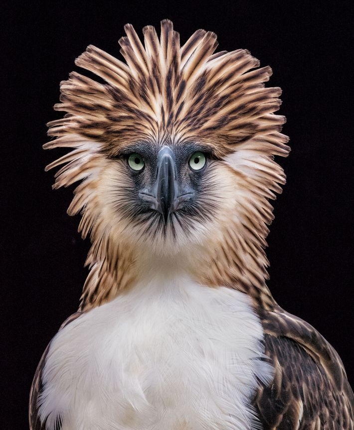 portfolio-aguia-filipina-aves-ameacadas