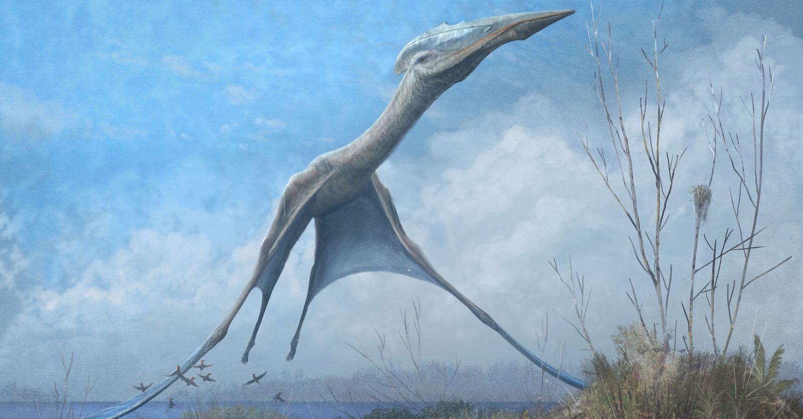 Imenso pterossauro antártico encontrado entre escombros do Museu Nacional