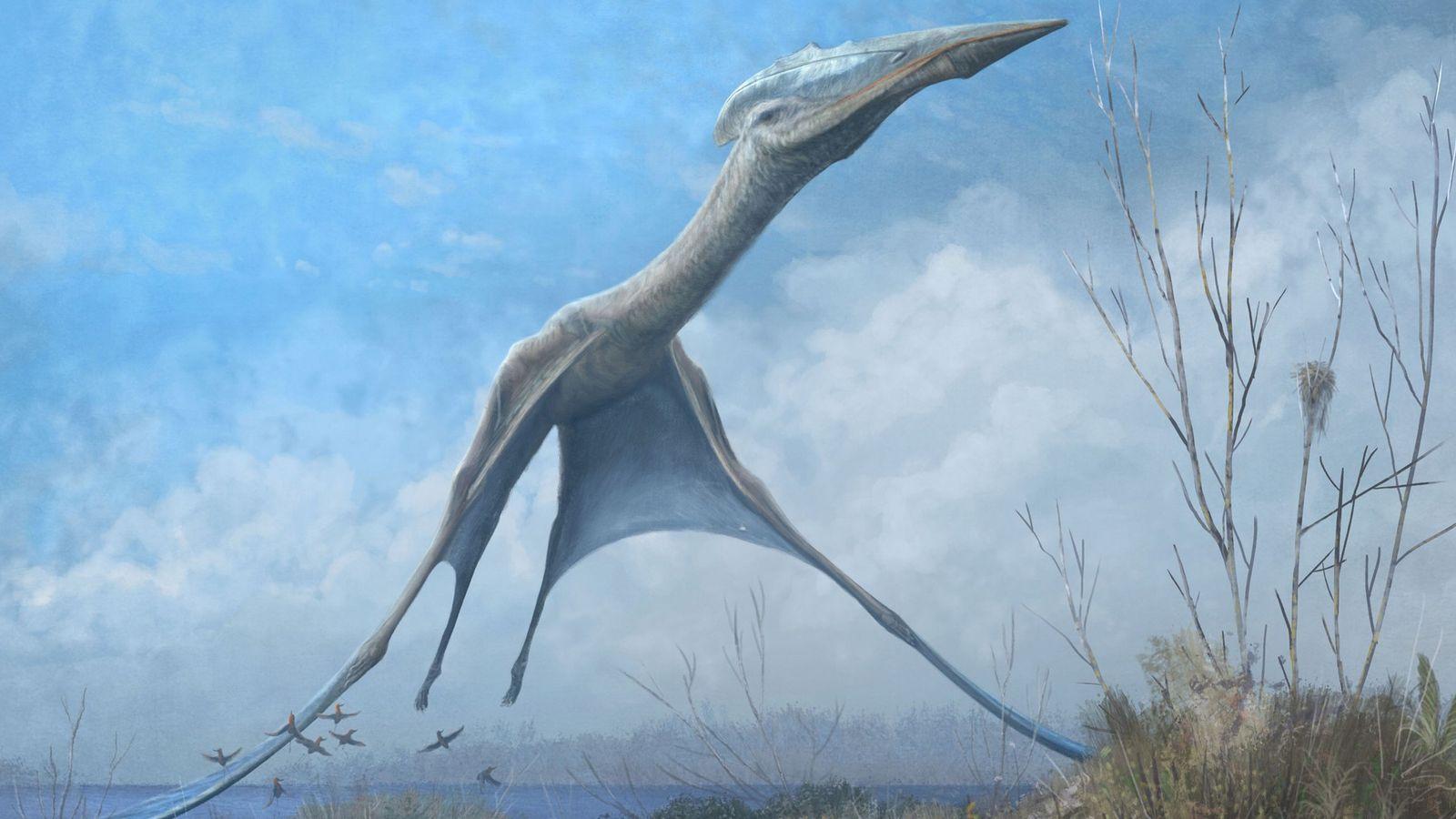promo-pterossauro-antartica-museu-nacional