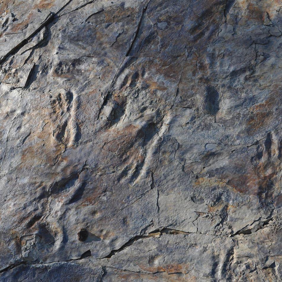 Misterioso parente dos crocodilos pode ter caminhado sobre duas patas