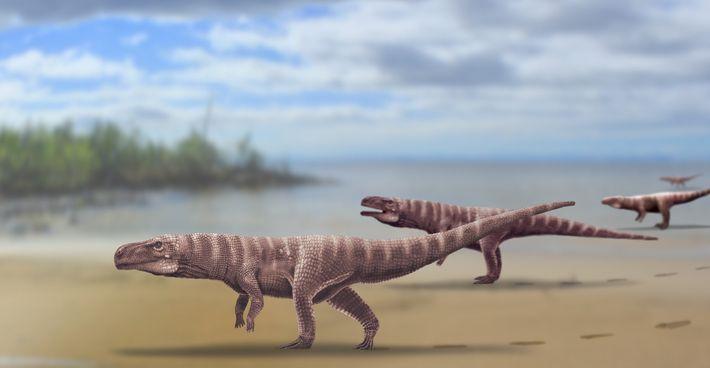 Reconstrução do Batrachopus grandis, um suposto crocodilomorfo que viveu há mais de 110 milhões de anos ...