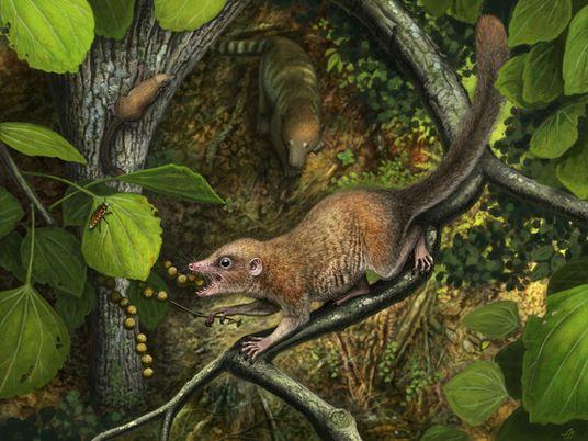 Teriam os primatas primitivos convivido com o T. rex? Evidências apontam para a hipótese
