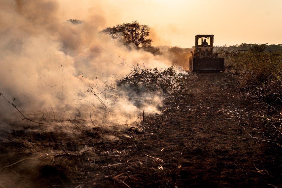 Brigadistas cavam aceiro em Poconé (MT) para criar uma barreira contra o fogo. Cerca de 160 profissionais ...