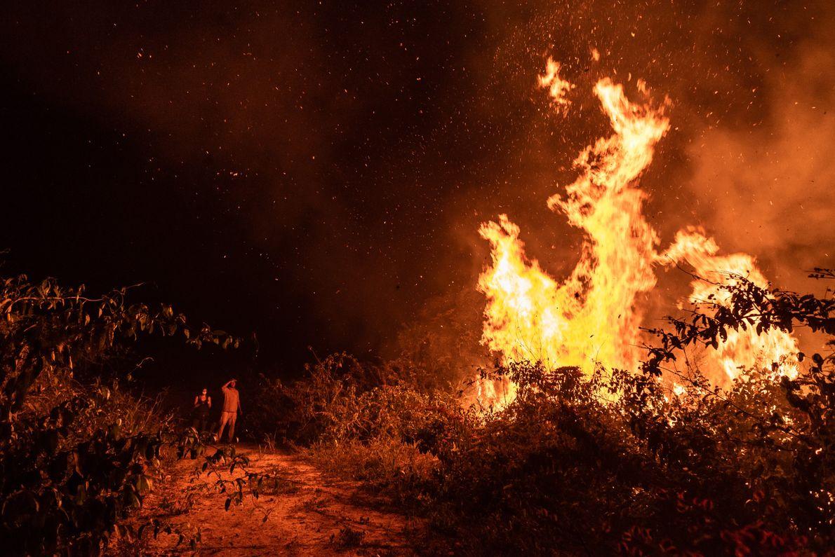 queimadas-pantanal-incendio-31