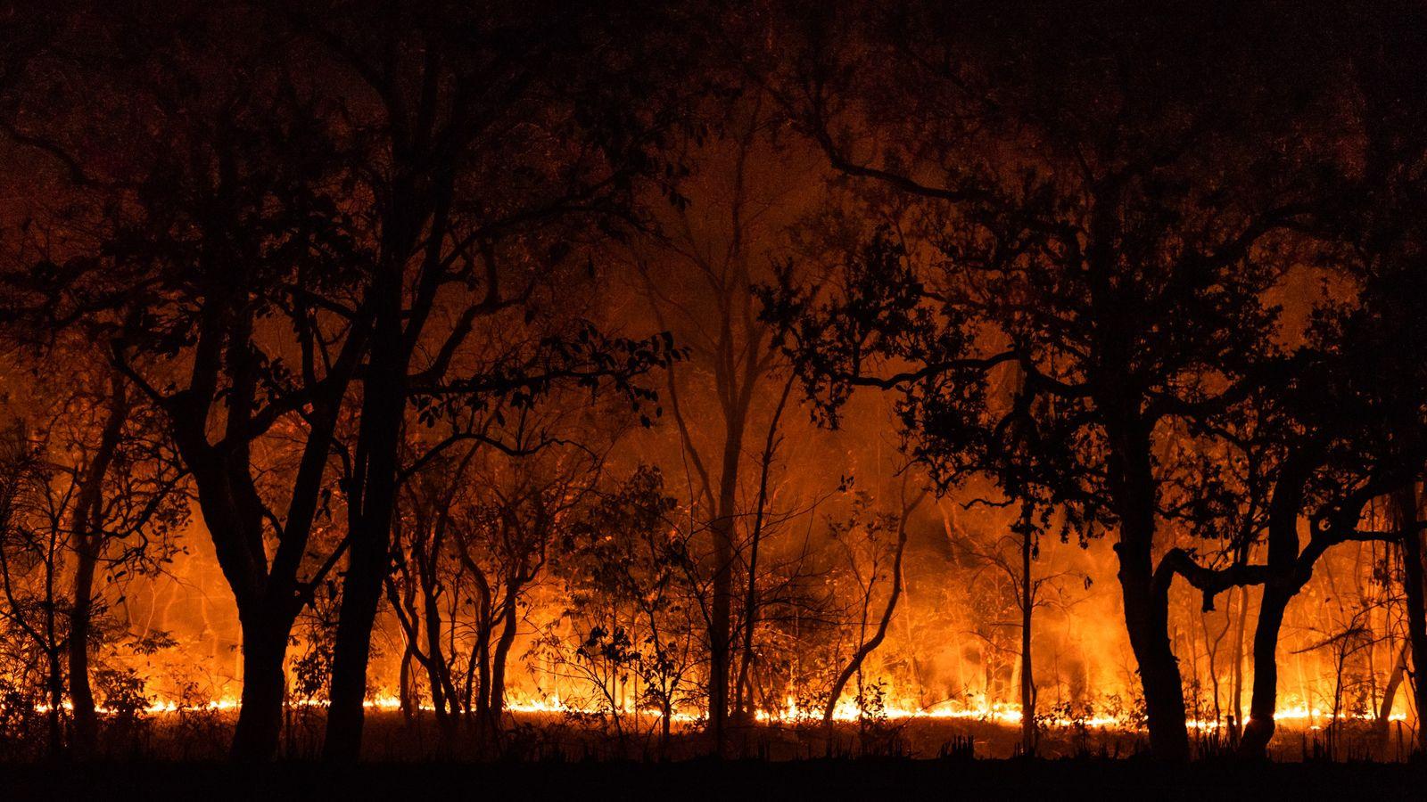 Queimadas já queimaram mais de 12% do Pantanal.
