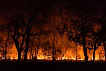 Queimadas avançam sobre o Pantanal, ameaçando pessoas e animais