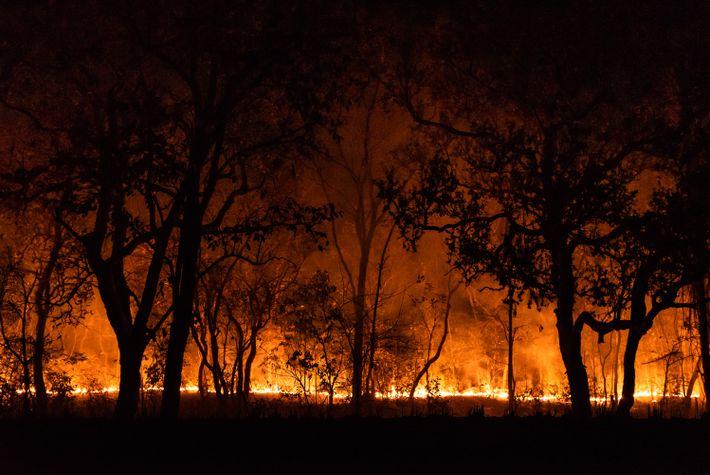 Queimadas no Pantanal não dão sinal de trégua