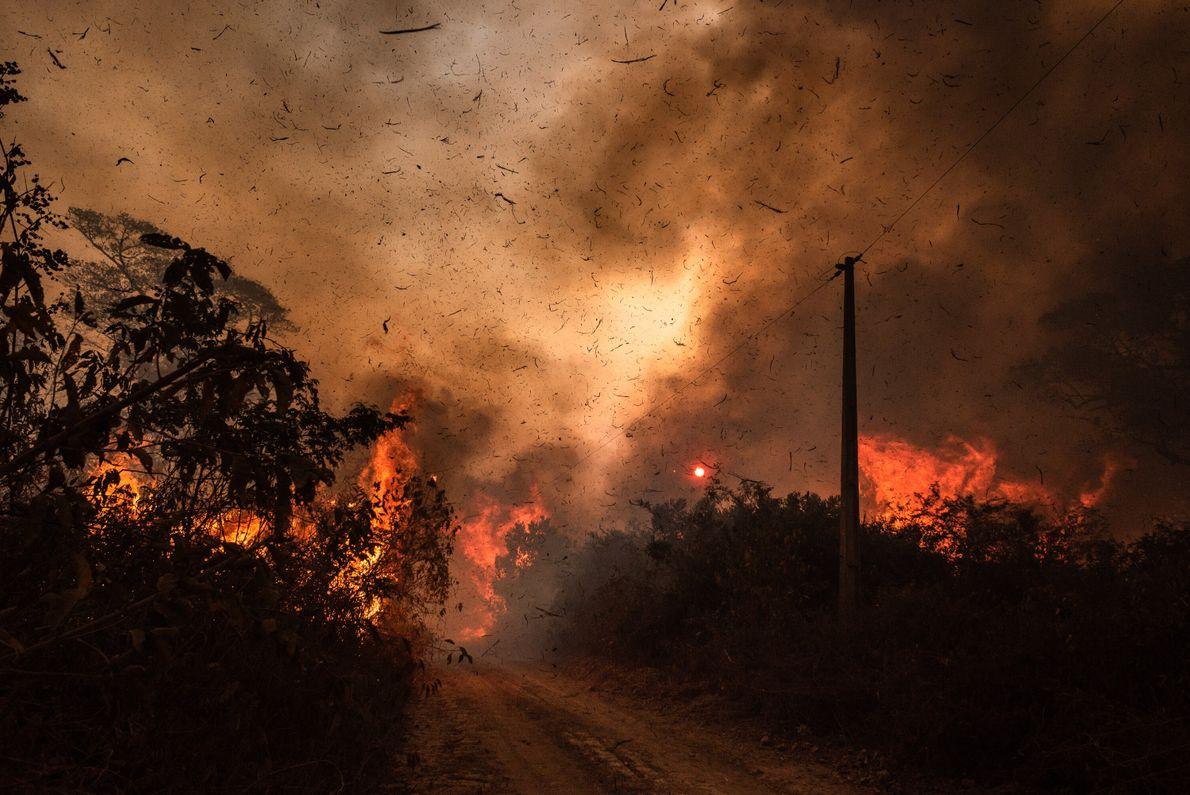 Trecho de mata ao lado de uma estrada é engolido por chamas, na zona rural de ...