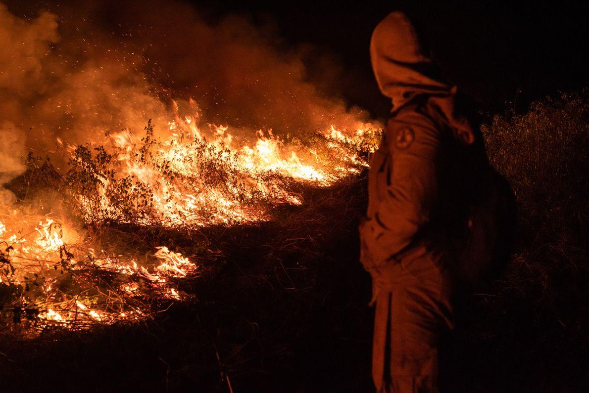Bombeiro combate incêndios no Pantanal Matogrossense. As equipes evitam trabalhar duranteas horas mais quentes do dia, ...